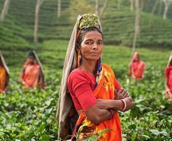 Indie kraj orientalny